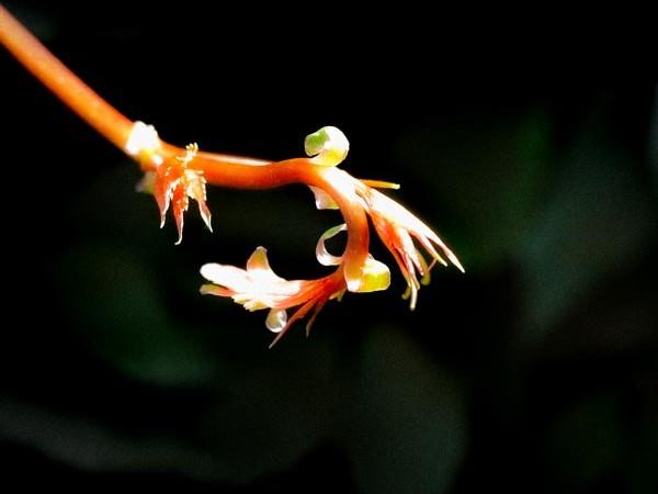 Le biomimétisme : s'inspirer de la nature pour innover durablement