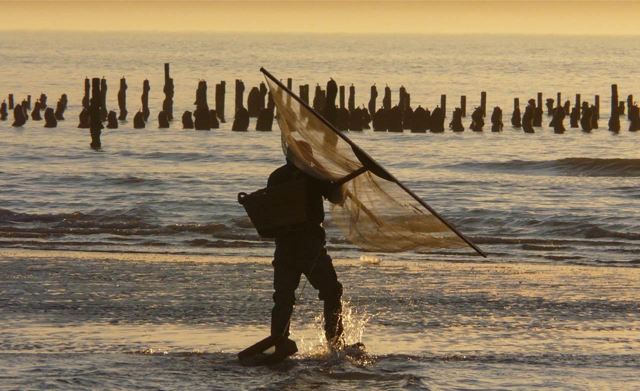 Pêche, écosystème, changement climatique… quels enjeux pour l'océan du 21ème siècle ?
