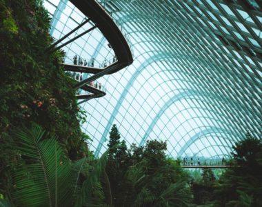 Les plantes, façonneuses de notre monde, clés ignorées de notre avenir